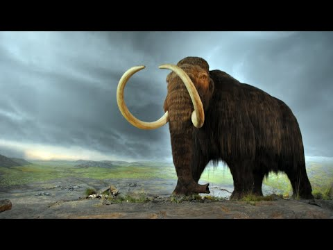 Why some scientists want the woolly mammoth back