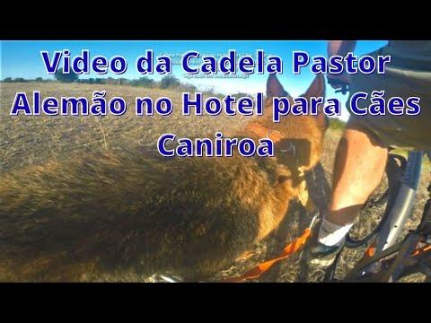 Cadela Pastor Alemão no Hotel para Cães Caniroa