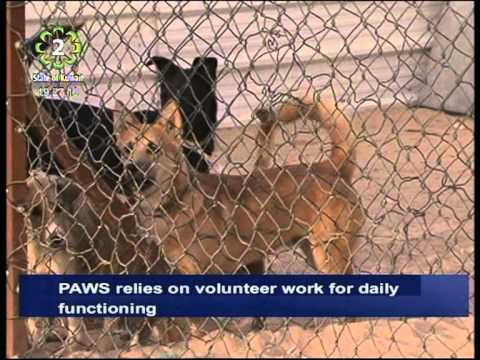 PAWS Kuwait relies on volunteers for their daily functioning