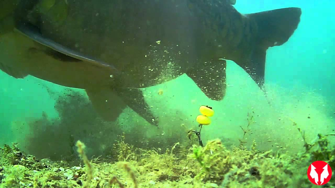 Water wolf hd an underwater fishing camera youtube