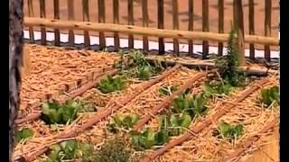 Expresso Show - Gardening  Parking Lot Gardening (6 01 2014)