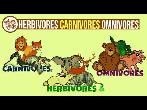Difference Between Herbivores, Carnivores And Omnivores With Example | CBSE Class 3 EVS _ Sakee Kids
