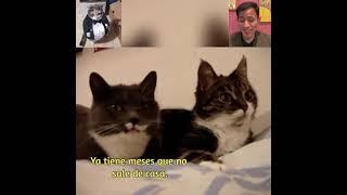 Así es una conversación entre gatos.