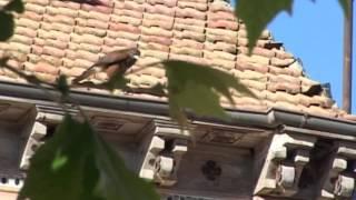 Control plaga de palomas