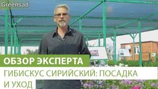 видео Рододендроны уход, посадка и выращивание в открытом грунте , размножение  в домашних условиях