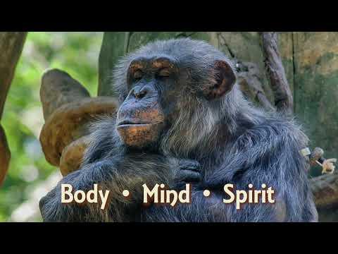 North Carolina Zoo Animal Yoga Poses #worldyogaday