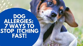 Dog Allergies Ways Stop Itching Fast