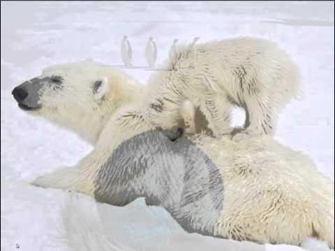 Arctic Webinar 02.11.16