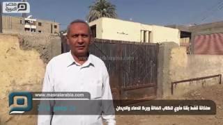 مصر العربية   سلخانة قفط بقنا مآوي للكلاب الضالة وبرك للدماء والديدان