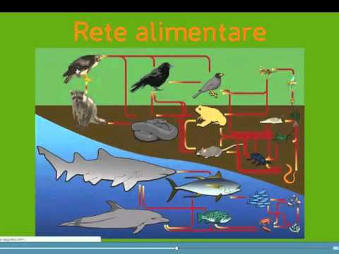 Ecosistemi E Catene Alimentari Youtube