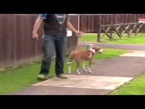 stop-dog-leash-pulling---dog-obedience-training-video