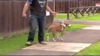 Stop Dog Leash Pulling - Dog Obedience Training Video