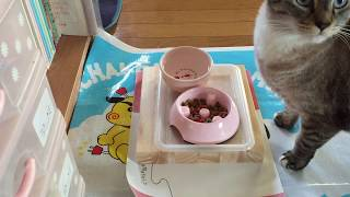 チャンネル登録お願いします!→http://ur0.link/I4Ds 我が家の猫をくま...