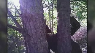 Video: Police rescue man found with hands nailed to tree