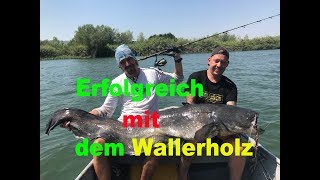 Erfolgreich Welsangeln Mit Dem Wallerholz / Giant Catfish With Clonk  By Stefan Seuß