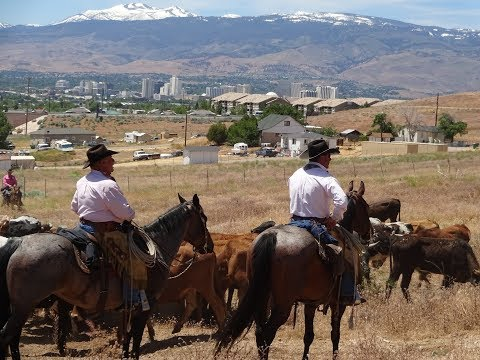 Inside The Biggest Little Cattle Drive
