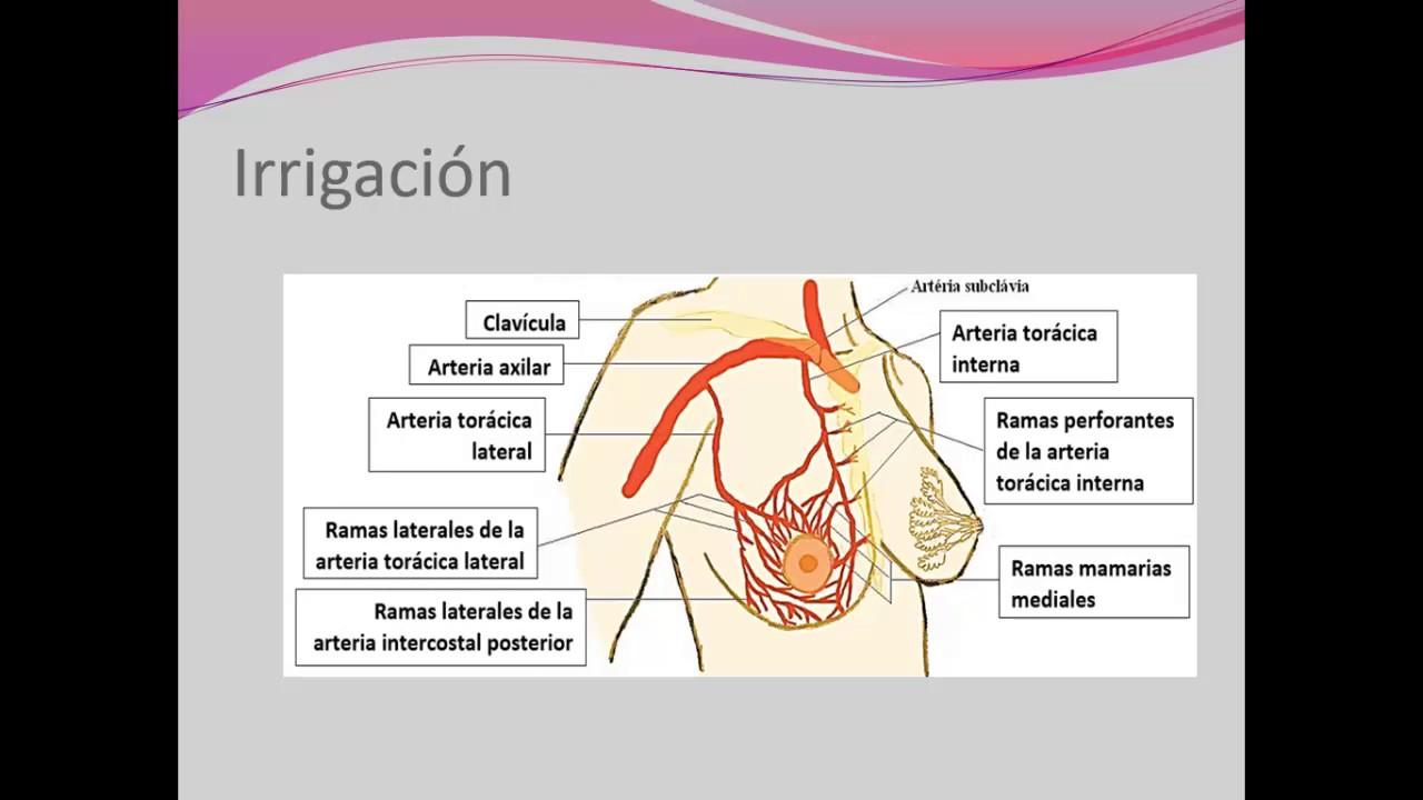 Increíble Anatomía Y Fisiología Tejidos Youtube Colección - Imágenes ...