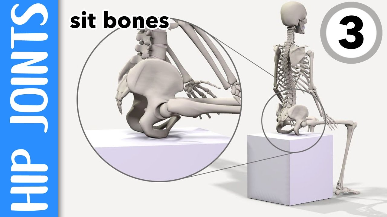 Where are your hip joints and sit-bones? EXPLAINED - YouTube
