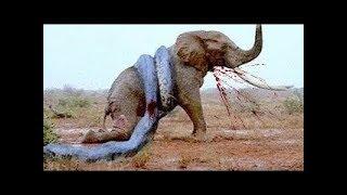 10 Extremas Peleas de Animales Salvajes Captadas en Cámara | TOP 10 Batallas Épicas de Animales