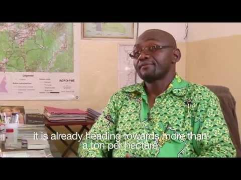 Pepper Export? IP Rights Meet Pepper Farming in Cameroon
