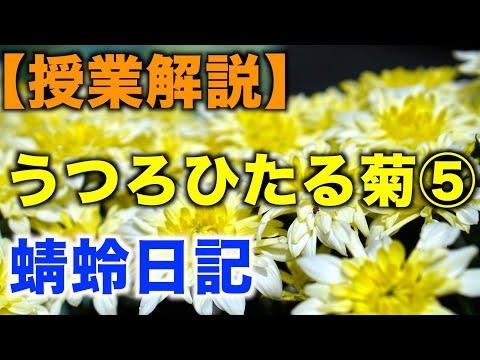 うつろひたる菊