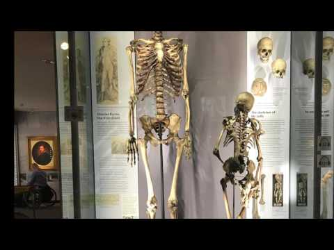 The Hunterian Museum Video Blog