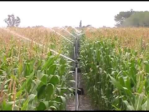 Maize Clip ExpoAgro 1