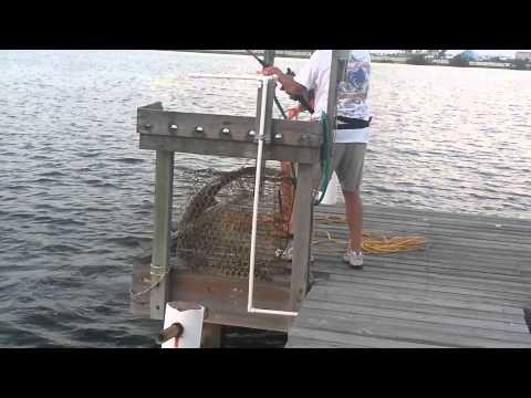 Crash boat basin bull shark