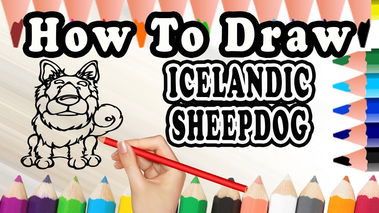 How To Draw A Icelandic Sheepdog Dog Drawing Step By Step Dog