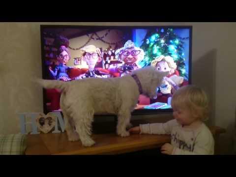 Mildred Dog enjoying the sainsburys Christmas advert!
