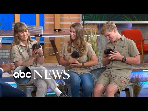 Crikey! It's the Irwins on 'GMA Day' with 'Quilly Nelson' and a huge python!