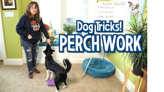 Susan Garrett's Perch Work Dog Tricks (Pivots and Spins)
