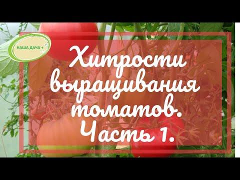 Хитрости выращивания томатов по природному земледелию.  Часть 1. Гусар Любовь
