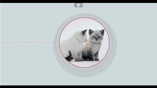 """Сомнение №4 """"Как подружить котенка с остальными членами семьи?"""""""