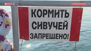 """ВЫПУСК НОВОСТЕЙ ИА """"КАМЧАТКА"""" ОТ 14.02.20"""