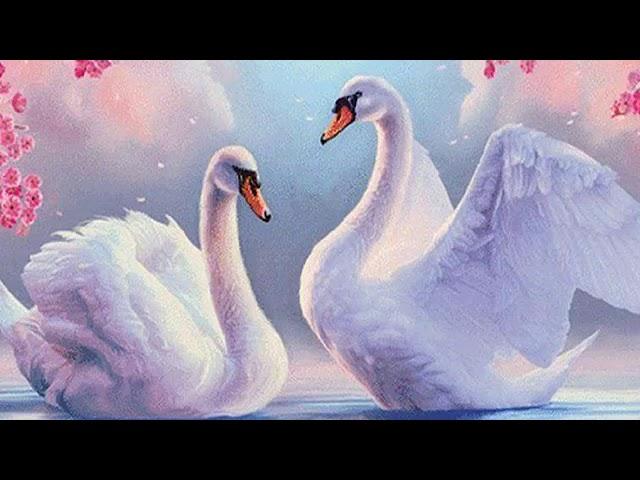 Лебеди цвета сирени