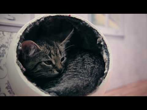 Extremely cute kittens on Keeping up with the Kattarshians!