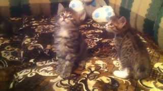 Маленькие и смешные наши коты  06