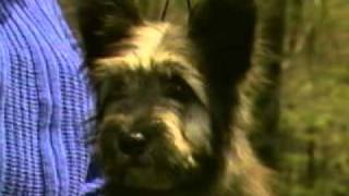Skye Terrier - Chapter 2