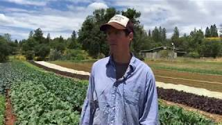 In Nevada County, vegetable growers find their fortune in the hills