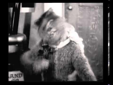 Кот на контрабасе