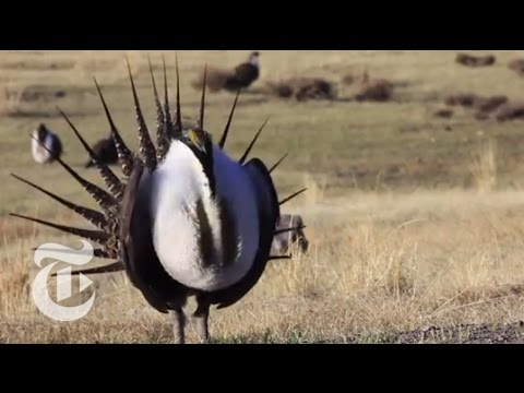 Birds Versus Wind Turbines | The New York Times