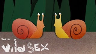 Sex Can Be Complicated... For Snails With Backward Organs