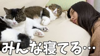 ソファーで仲良く寝る飼い主と猫