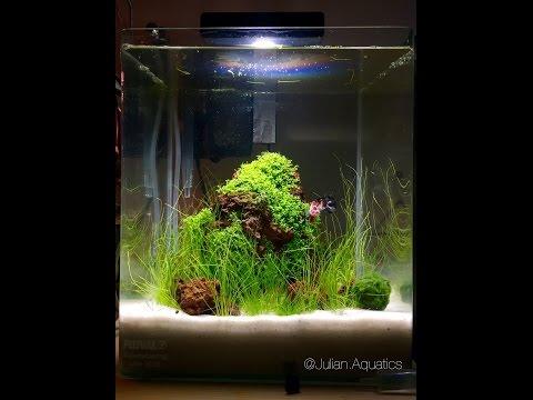 Nano Tank Live Stream