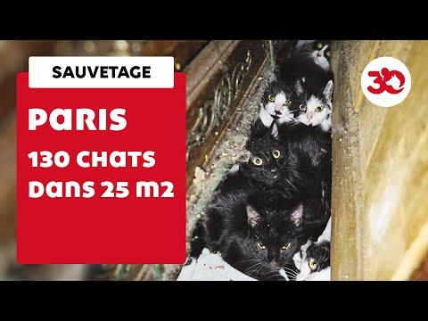 Après leur sauvetage, les 130 chats de Paris ont besoin de vous !