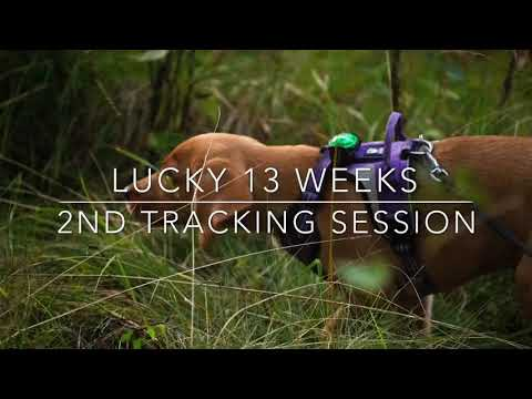 Lucky tracking - 2nd track