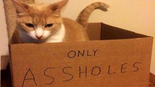 Asshole cats compilation