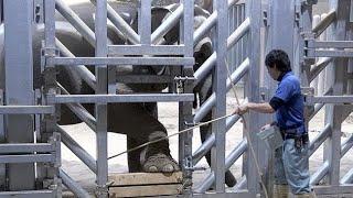 訓練進むアジアゾウ 札幌・円山動物園 プールでリラックス (2019/02/07)北海道新聞