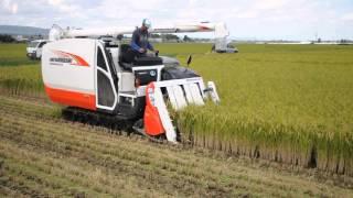 2000万を超えるスーパーコンバインでの稲刈りは、圧巻です。